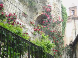 May Roses by francy-stock