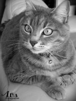 My cat by Ana-photographie