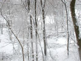 Winter Forest IV by darchiel