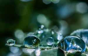 Three Drops by isischneider