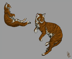 Toyger Poses by chenneoue