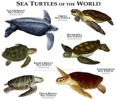 Sea Turtles of the World by rogerdhall