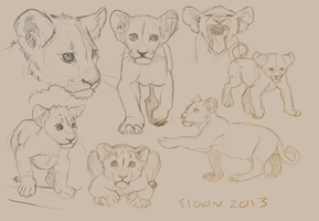 Lion cub studies by tigon