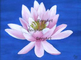 Water Lily by BevyArt