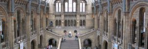 Inside Natural History Museum by Silinde-Ar-Feiniel