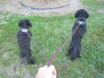 Tippy and Lily--looking for the rabbit by knighttemplar1