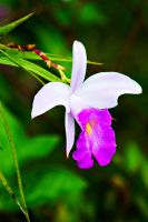 Wild Orchid flower 1 by a6-k