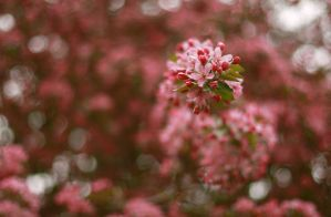 Blossom in Stream of Spring by jarda13