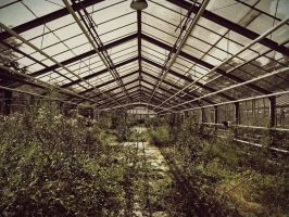 Old Greenhouse by Alaisyn