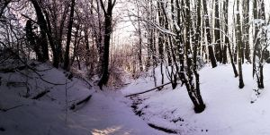 deep in the snowy forrest by Tahila