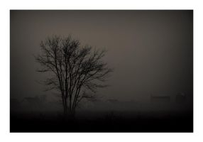 Shapes in the mist II by Ikabe