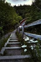 Stairs and Daisies by Lydia-distracted