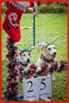 Agility Christmas Edition 10 by PoodleSchmoodle