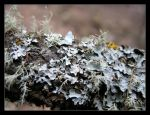 Mosses and Lichens by TerrorCookie