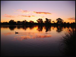 Ducky Sunset by GoOdz