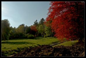 Red Tree HDR by Batteryhq