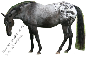 Appaloosa Precut by xabovetheclouds