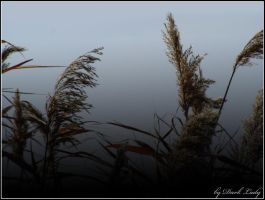 Reed by Alissia666