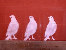 Birds on the wall. by Fastboyent