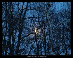 Cradle Of The Moon I 888 by Eolhin