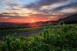 Cornfield Sunset by FlorentCourty