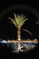 Palm Tree at Night by JS92