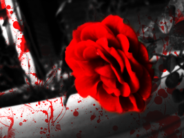 Bloody Rose by rudybb