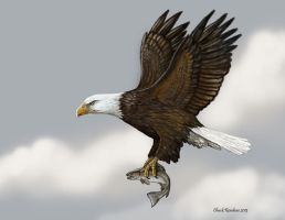 Good Fishing- Bald Eagle by ChuckRondeau