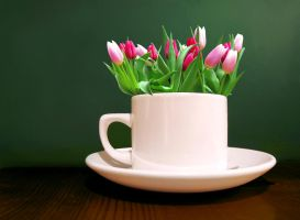 Tulips in a cup by S3xyGlass3s