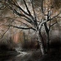 misterious woods III by incisler