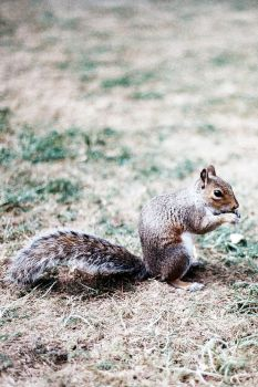 Fantastic Mr. Squirrel by jonnyXbrainless