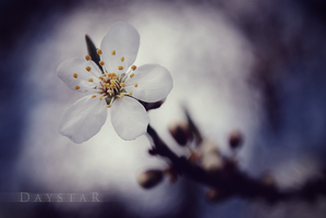 Delicate thing by Daystar-Art