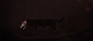 Wolf Spirit by Polemical17