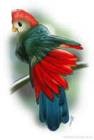 Red-Crested Turaco by vaksine