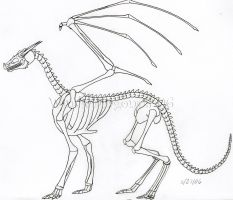 Dragon Skeleton by WindieDragon