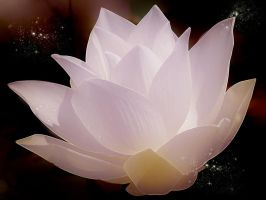 The Lotus Flower by ALK04