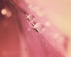 Breathless by Alyphoto
