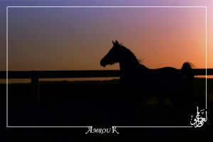 Sayer Silhouette-Arabian horse by AMROU-A