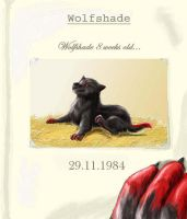 Happy Birthday Wolfshade by Khiljon