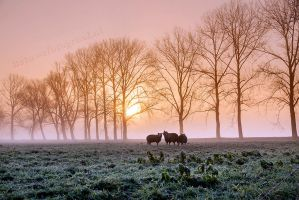 It was cold outside...... by Betuwefotograaf