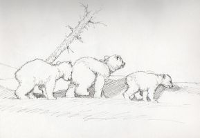 Three Little Bears by MarkRHansen