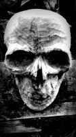 Skull In Black And White by jackaburl