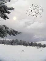 Premade Background  1014 by AshenSorrow
