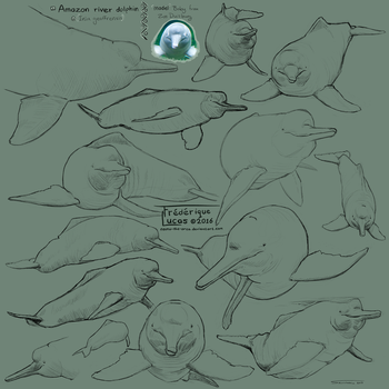 Amazon river dolphin studies by namu-the-orca