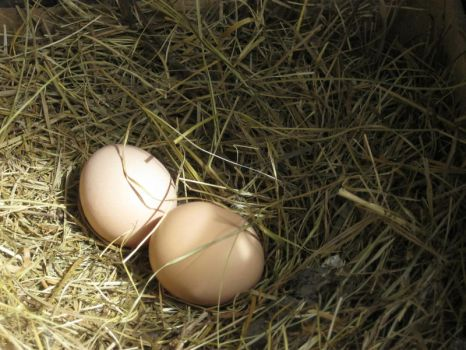 eggs by Anchi3