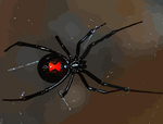 Black Widow Spider by Oultre
