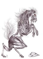 Skeleton Horse by Teggy