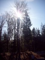 Bright sun tall tree by eyannaandkianalovesu