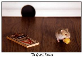 Great Escape by spudink