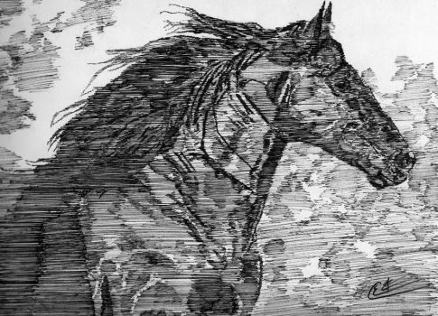 Black Horse by the-author-s-realm